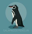 flat galapagos penguin vector image vector image