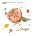 Handmade watercolor orange for retro design vector image vector image