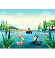A group of aquatic birds at the pond vector image vector image