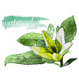 green watercolor flower with leafs vector image vector image