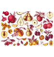 hand drawn colorful fruits collection vector image vector image