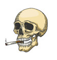 skull smoking color sketch cigarette engraving vector image