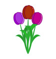 three multi-colored tulips on a white background vector image vector image