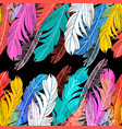 background multicolored feathers vector image vector image
