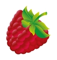 blackberry fresh fuit healthy isolated icon vector image vector image