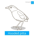 Hooded pitta bird learn birds coloring book vector image vector image