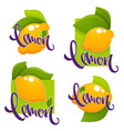 lemon flavour collection of glossy stickers vector image vector image