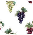 watercolor grape pattern vector image vector image