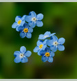 blue forget me not spring flowers vector image vector image