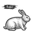 hand drawn rabbit or bunny sketch hare vector image