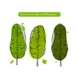 banana leaves sketch detailed vector image