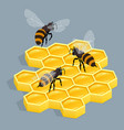 bees on comb isolated isometric vector image vector image