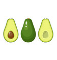 set of whole and sliced avocado fruit vector image