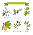 vintage collection of hand drawn medicinal herbs vector image vector image