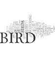 What kind of bird was that text word cloud concept