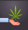 hand holding marijuana cannabis leaf drug vector image
