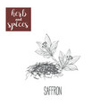 saffron skech herbs and spices vector image vector image