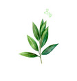 bay leaves herb spice isolated on white background vector image vector image