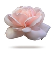 Pink rosebud isolated on white background front vector image vector image