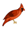 red cardinal exotic bird icon vector image vector image