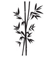 decorative bamboo branches isolated on white vector image vector image