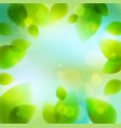 fresh green leaves summer or spring blurred vector image