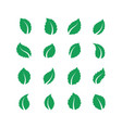 mint leaves peppermint melissa green leaf fresh vector image