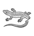 lizard with self amputated tail sketch vector image