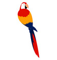 scarlet macaw on white background vector image vector image