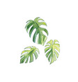 three leaves palm vector image