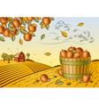 Apple harvest landscape vector image vector image