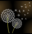 black background with spring dandelion blowing vector image vector image