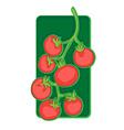 cherry tomato clip art vector image vector image