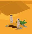 meerkats in the desert vector image