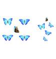 set blue butterflies vector image