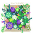 succulent flowers in the box vector image