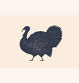 turkey bird concept design of farm animals vector image vector image