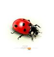 ladybug isolated on white background vector image
