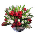 luxurious bouquet of tulips vector image