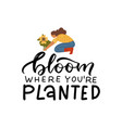 bloom where you are planted - hand drawn quote vector image