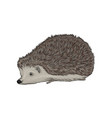 cute hedgehog wild forest animal vector image vector image