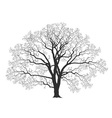Oak tree vector image vector image