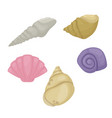 sea shell marine beach nature colorful tropical vector image vector image