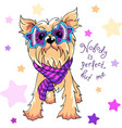 yorkshire terrier dog vector image vector image