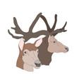 deer portrait vector image vector image