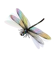 dragonfly isolated and colorful EPS10 vector image