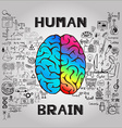 Human brain infographic vector image