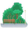 wooden park bench under big tree and a street lamp vector image