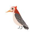 beautiful cardinal bird on a vector image