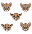 little puma muzzle set vector image